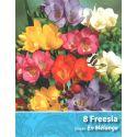 8 Bulbes de fleurs