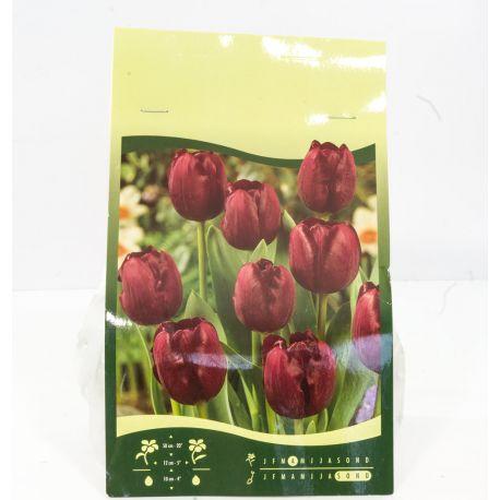6 Bulbes de fleurs