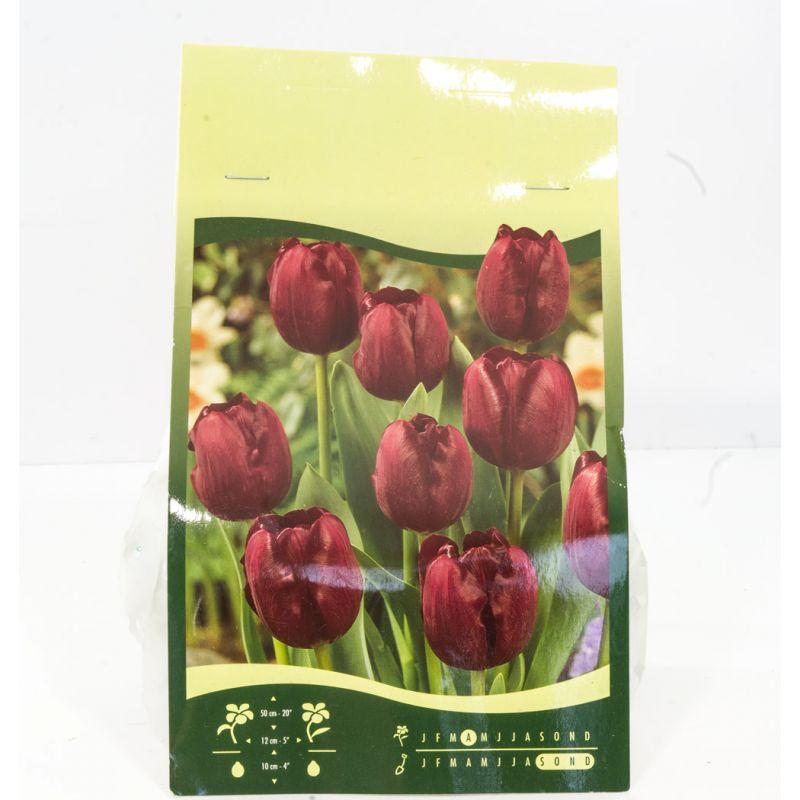 6 bulbes de fleurs boutique moins for Fleur pas chere a planter